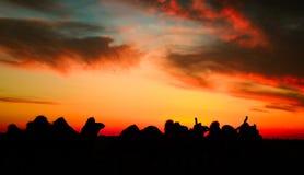 Kafilah da equipe do camelo das caravana Foto de Stock Royalty Free