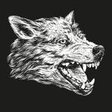 Kaganiec wilk, przyrody nakreślenia ręka rysujący wektorowy ilustracyjny realistyczny biel na czarnym tle Fotografia Stock