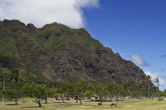 Kahana valley state park Royalty Free Stock Photography