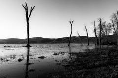 Kahle Bäume Stockfoto