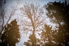 Kahle Bäume reflektiert im Pool Stockfoto
