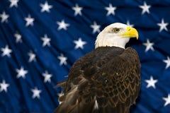 Kahler Adler gegen USA-Markierungsfahne Lizenzfreie Stockfotografie