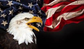 Kahler Adler mit amerikanischer Flagge Stockbilder