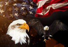 Kahler Adler mit amerikanischer Flagge Lizenzfreies Stockfoto