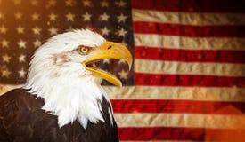 Kahler Adler mit amerikanischer Flagge Stockfotos
