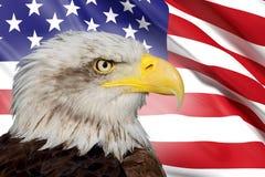 Kahler Adler und USA-Markierungsfahne Stockfotografie
