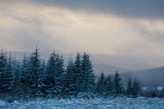 Kahler asten paisaje del invierno en Alemania Foto de archivo