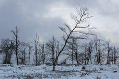 Kahler asten paisaje del invierno en Alemania Fotos de archivo