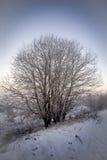 Kahler Baum bedeckt mit Schnee Lizenzfreie Stockbilder