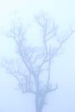 Kahler Baum im Winter unter tiefem Nebel Lizenzfreie Stockbilder