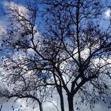 Kahler Baum mit Jett unter klarem blauem Himmel Lizenzfreies Stockbild
