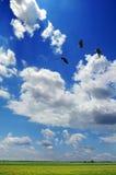 Kahles Eaglers Flugwesen Stockbilder