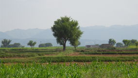 Kahoon dolina Obrazy Stock
