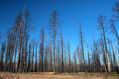 Kaibab National Forest, Arizona, USA Royalty Free Stock Photo