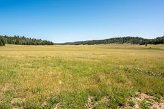 Kaibab National Forest. At Grand Canyon National Park Royalty Free Stock Image