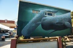 KAIKOURA,新西兰- 2011年4月3日: 库存图片