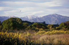 Kaikoura Ranges. The Kaikoura Ranges are the northernmost extension of the Southern Alps on New Zealand's South Island Royalty Free Stock Images