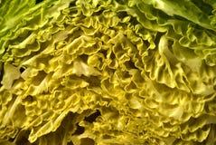 kail κατσαρό λάχανο Στοκ φωτογραφία με δικαίωμα ελεύθερης χρήσης