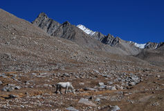 Kailash. The valley in  the  northen  side  of  Kailash Royalty Free Stock Photo