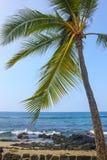 Kailua-Kona海岸与棕榈的 库存照片