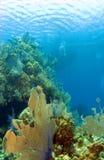 Kaiman Brac Riff mit Boot Stockbild
