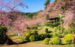 Kain de Khunchang, Chiangmai, Tailândia Imagens de Stock