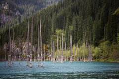 Kaindy halny jezioro w Kazachstan Obraz Royalty Free