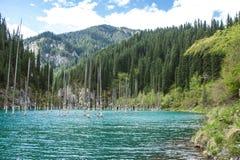 Kaindy halny jezioro w Kazachstan Fotografia Royalty Free