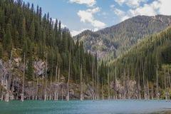 Kaindy halny jezioro w Kazachstan Obrazy Stock