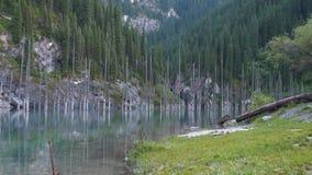 Kaindy jezioro w Kazachstan znać także jako brzozy Drzewo jezioro lub Podwodny las zbiory wideo