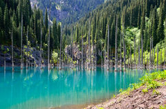 Kaindy Lake in Kazakhstan Stock Image