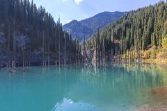 Kaindy Lake with spruce tree trunks coming out from its water, in Kazakhstan. stock photos