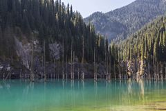 Kaindy Lake with spruce tree trunks coming out from its water, in Kazakhstan. stock image