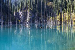 Kaindy Lake with spruce tree trunks coming out from its water, in Kazakhstan. royalty free stock photography