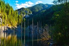 Kaindy Lake in Tien Shan mountain, Kazakhstan. Royalty Free Stock Image