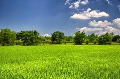 Kaiping Diaolou Village rice paddy. A rice paddy at Kaiping Diaolou in Zili village in Kaiping China in Guangdong province on a sunny blue sky day stock images