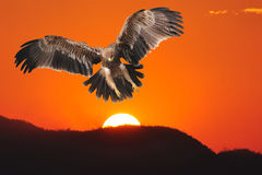 Kaiser-Eagle Stockbilder