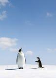 Kaiser und Adelie-Pinguin Stockbild