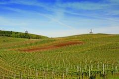 Kaiserstuhl地区的葡萄园 免版税库存图片