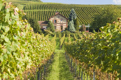 Kaiserstuhl vineyard, Germany Stock Photos