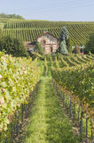 Kaiserstuhl vineyard, Germany Stock Images