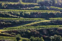 Kaiserstuhl is a wine-growing region in Germany. In the Summer royalty free stock photo