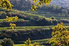 Kaiserstuhl is a wine-growing region in Germany. In the Summer royalty free stock photography