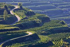 Kaiserstuhl is a wine-growing region in Germany. In the Summer stock photography