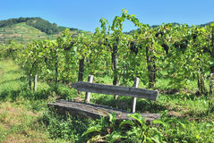 Kaiserstuhl Wine Region,Black Forest,Germany. Grape Arbor at  Kaiserstuhl Wine Region in Black Forest near Vogtsburg,Germany Stock Image