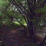 Kaj av den Neva floden Royaltyfria Bilder