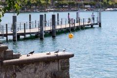 Kaj av Zurich sjön, Schweiz Royaltyfria Foton