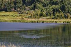 Kajak auf dem See Stockfotos