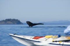 Kajak e balena di humpback Fotografie Stock