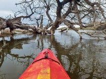 Kajak en gevallen cottonwood boom Royalty-vrije Stock Foto